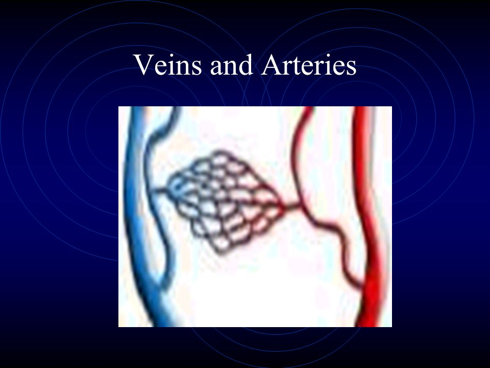 Veins and Arteries
