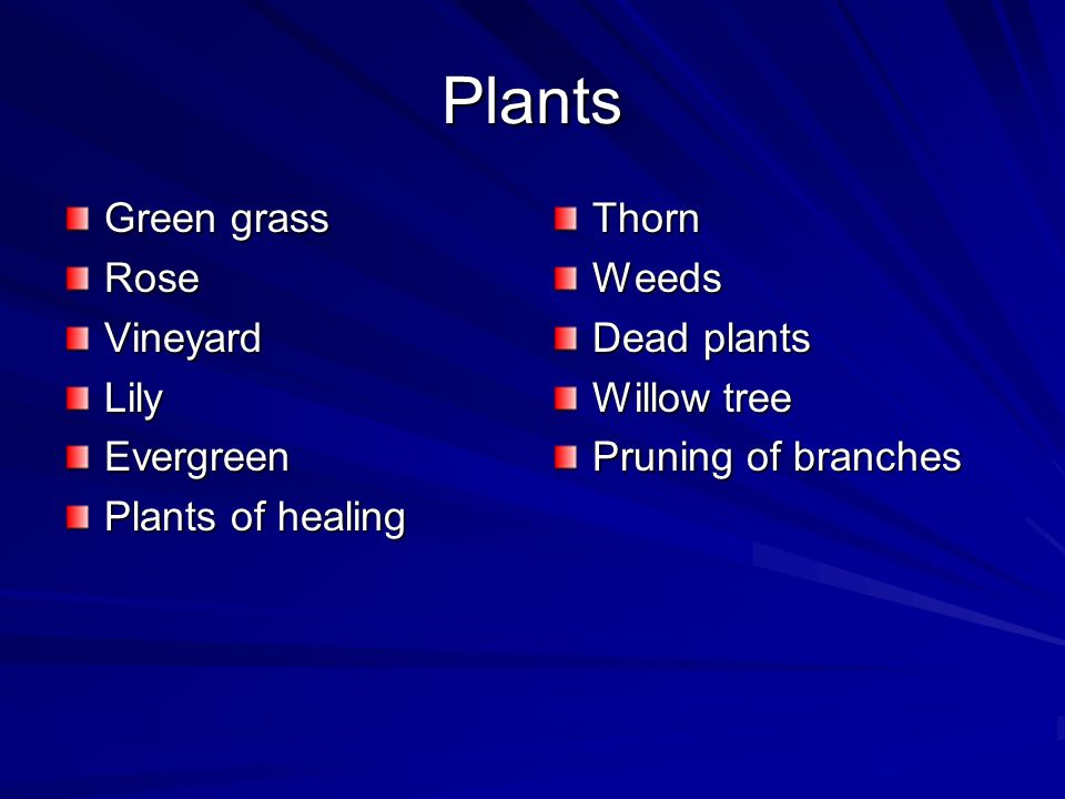 Plants Green grass RoseVineyardLilyEvergreen Plants of healing ThornWeeds Dead plants Willow tree Pruning of branches