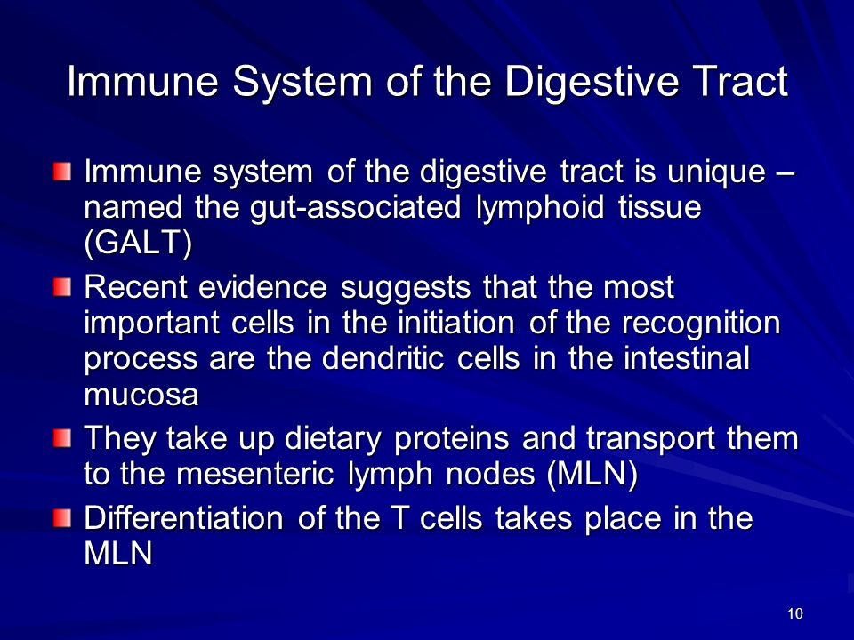 10 Immune System of the Digestive Tract Immune system of the digestive tract is unique – named the gut-associated lymphoid tissue (GALT) Recent evidence suggests that the most important cells in the initiation of the recognition process are the dendritic cells in the intestinal mucosa They take up dietary proteins and transport them to the mesenteric lymph nodes (MLN) Differentiation of the T cells takes place in the MLN