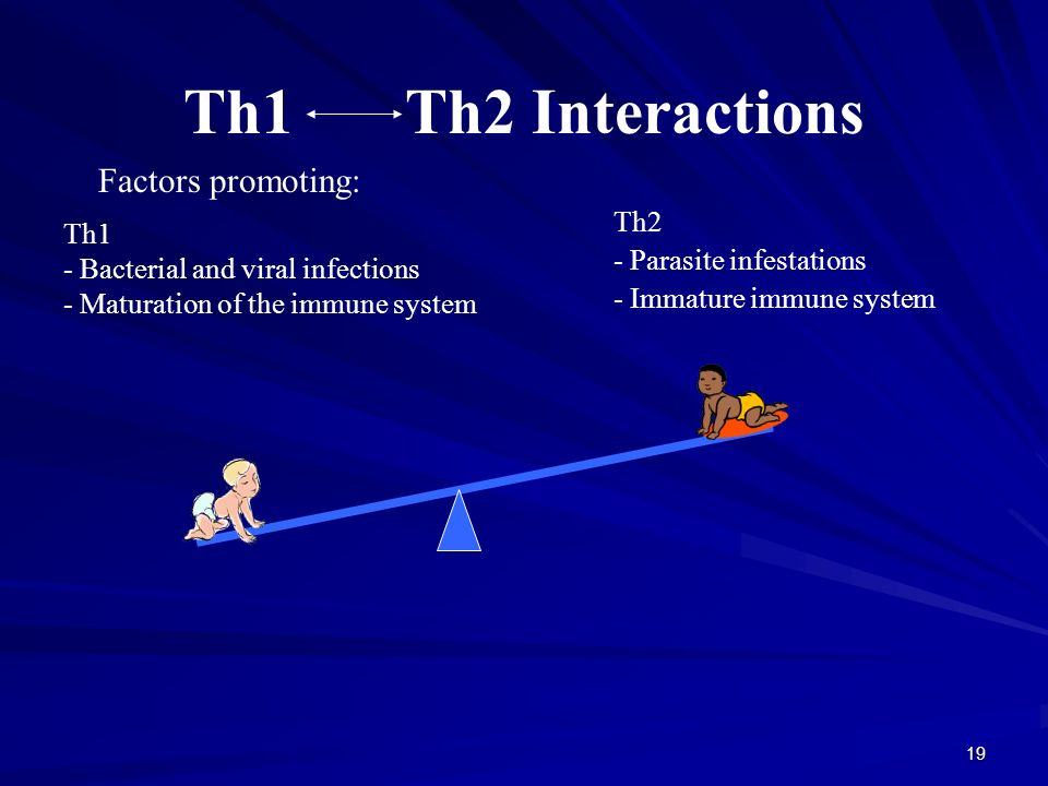 19 Th1 Th2 Interactions Factors promoting: Th1 - Bacterial and viral infections - Maturation of the immune system Th2 - Parasite infestations - Immature immune system