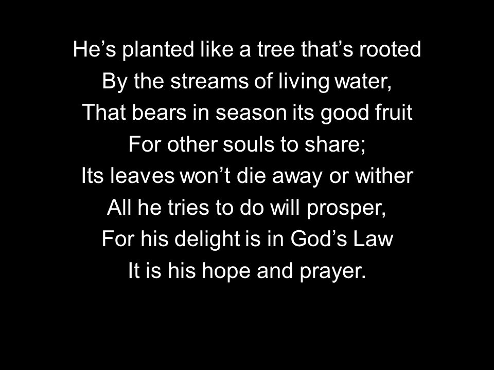 Hes planted like a tree thats rooted By the streams of living water, That bears in season its good fruit For other souls to share; Its leaves wont die away or wither All he tries to do will prosper, For his delight is in Gods Law It is his hope and prayer.