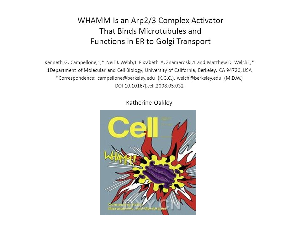 WHAMM Is an Arp2/3 Complex Activator That Binds Microtubules and Functions in ER to Golgi Transport Kenneth G.