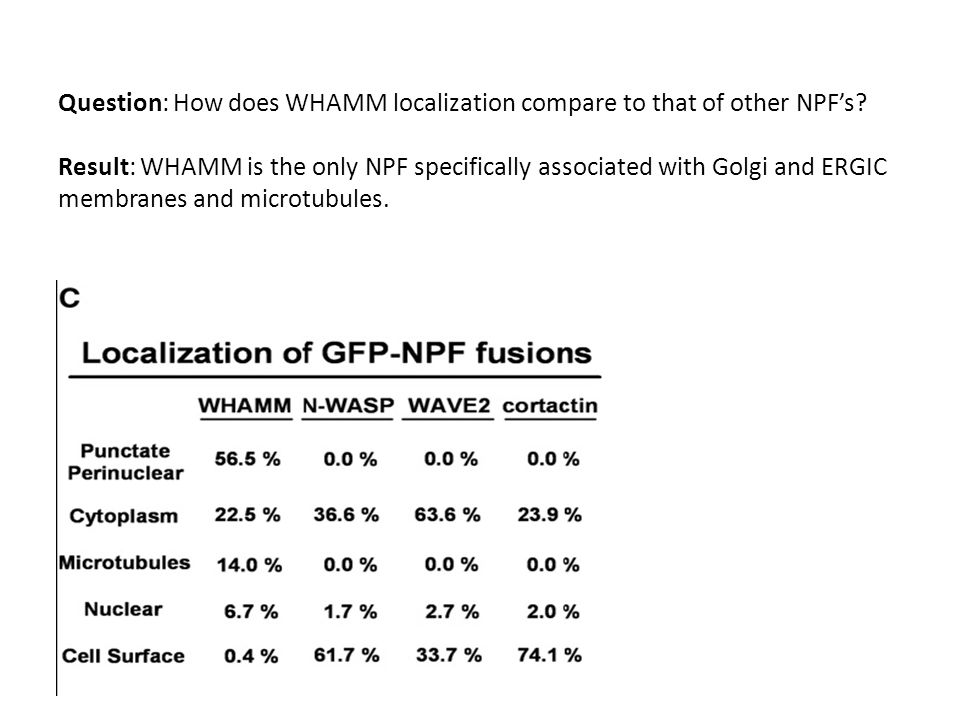 Question: How does WHAMM localization compare to that of other NPFs.