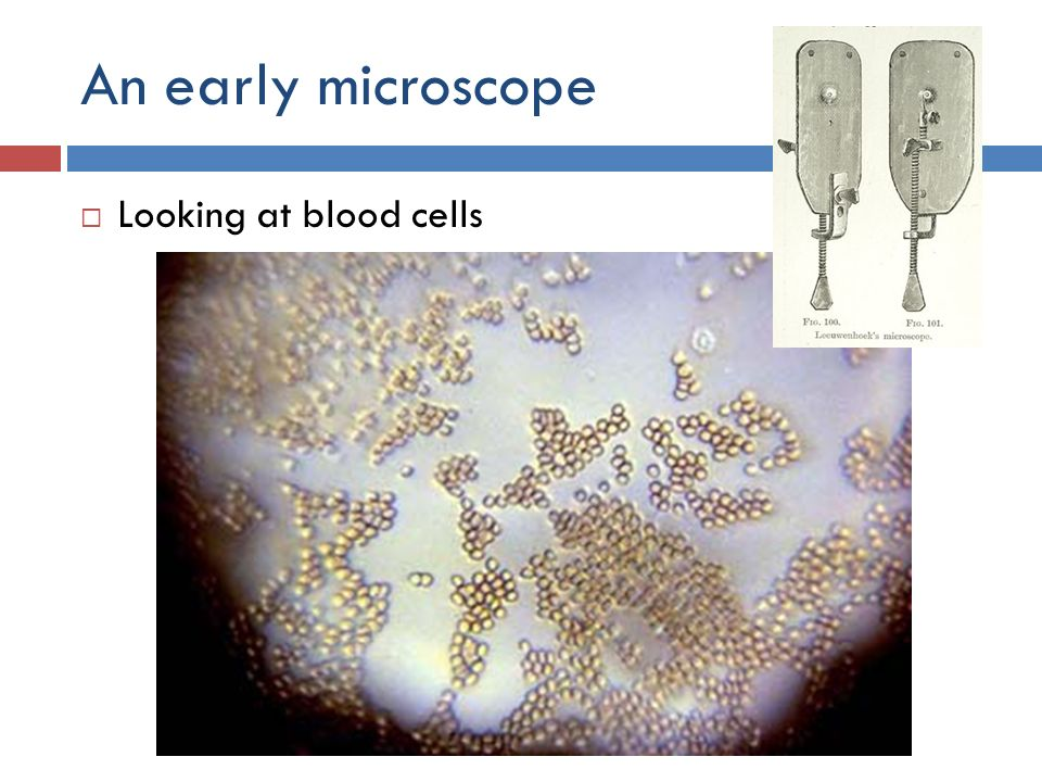 An early microscope Looking at blood cells