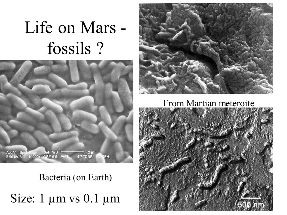 Life on Mars - fossils From Martian meteroite Bacteria (on Earth) Size: 1 µm vs 0.1 µm