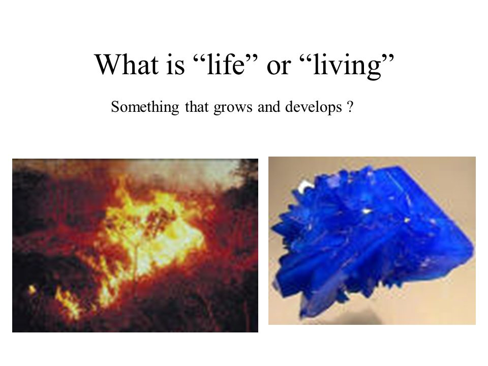 What is life or living Something that grows and develops