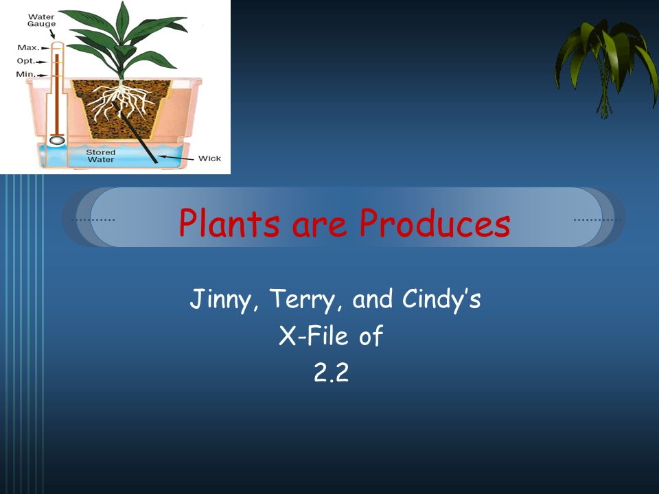 Plants are Produces Jinny, Terry, and Cindys X-File of 2.2