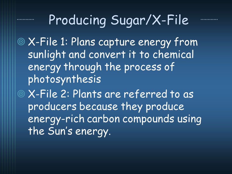 Producing Sugar/X-File X-File 1: Plans capture energy from sunlight and convert it to chemical energy through the process of photosynthesis X-File 2: Plants are referred to as producers because they produce energy-rich carbon compounds using the Suns energy.