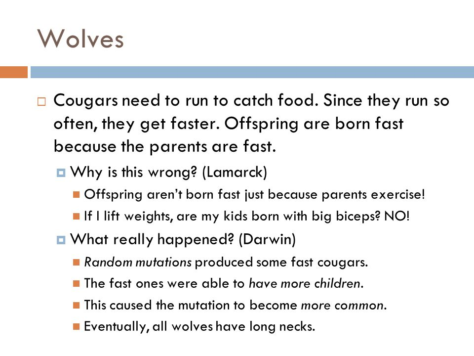 Wolves Cougars need to run to catch food. Since they run so often, they get faster.