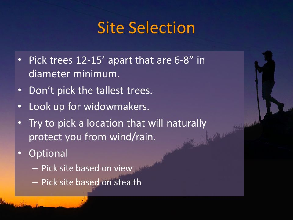 Site Selection Pick trees 12-15 apart that are 6-8 in diameter minimum.