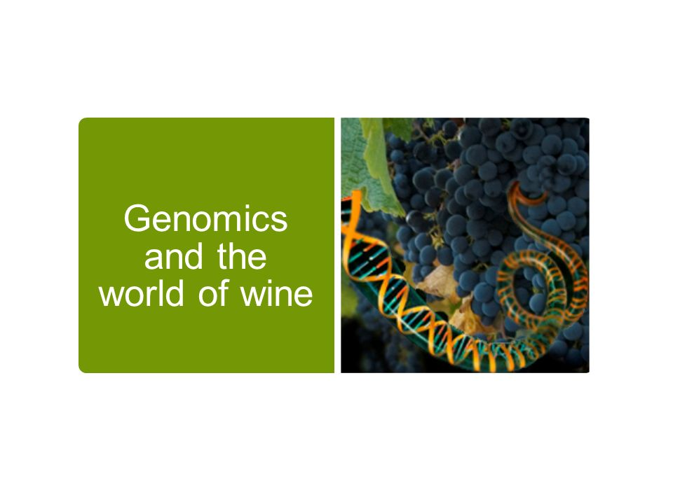 Genomics and the world of wine