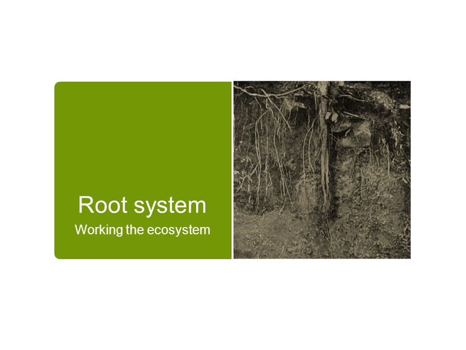 Root system Working the ecosystem