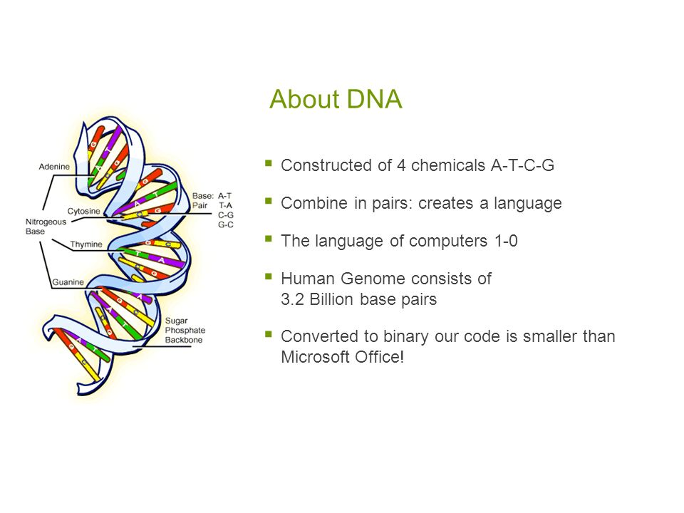 About DNA Constructed of 4 chemicals A-T-C-G Combine in pairs: creates a language The language of computers 1-0 Human Genome consists of 3.2 Billion base pairs Converted to binary our code is smaller than Microsoft Office!