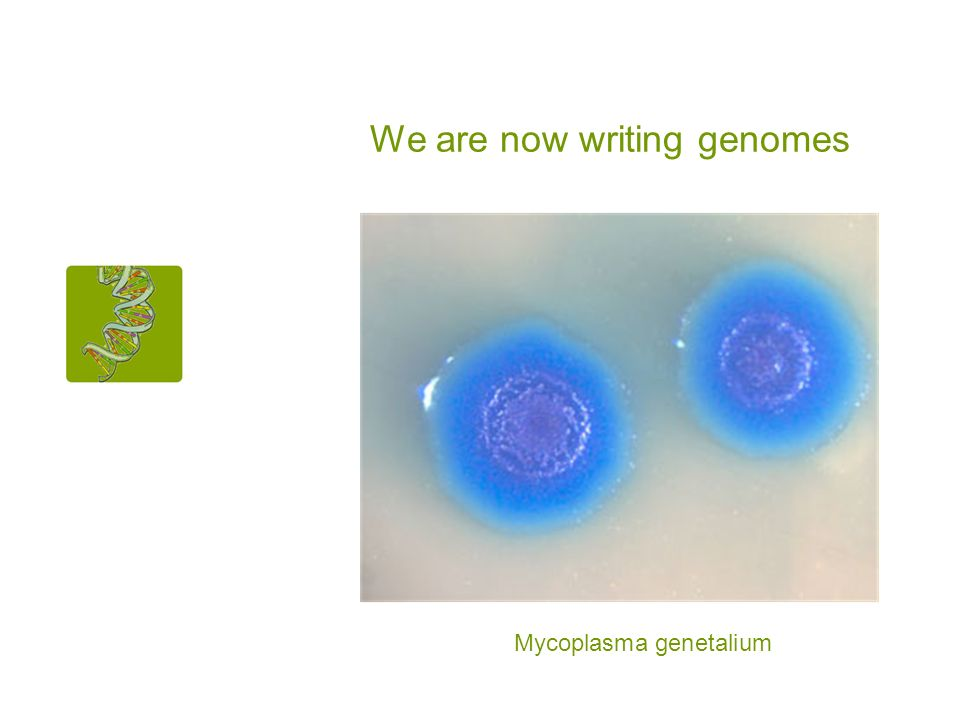 We are now writing genomes Mycoplasma genetalium