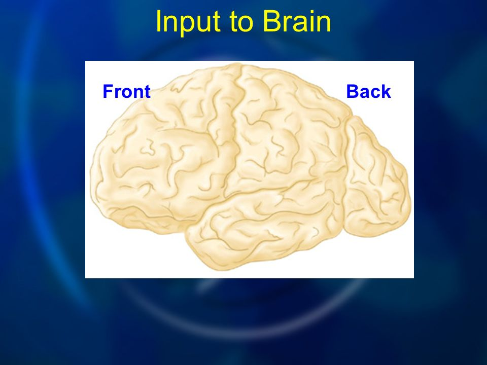 Input to Brain FrontBack