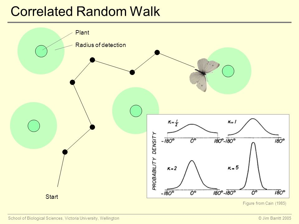 © Jim Barritt 2005School of Biological Sciences, Victoria University, Wellington Correlated Random Walk Start Plant Radius of detection Figure from Cain (1985)