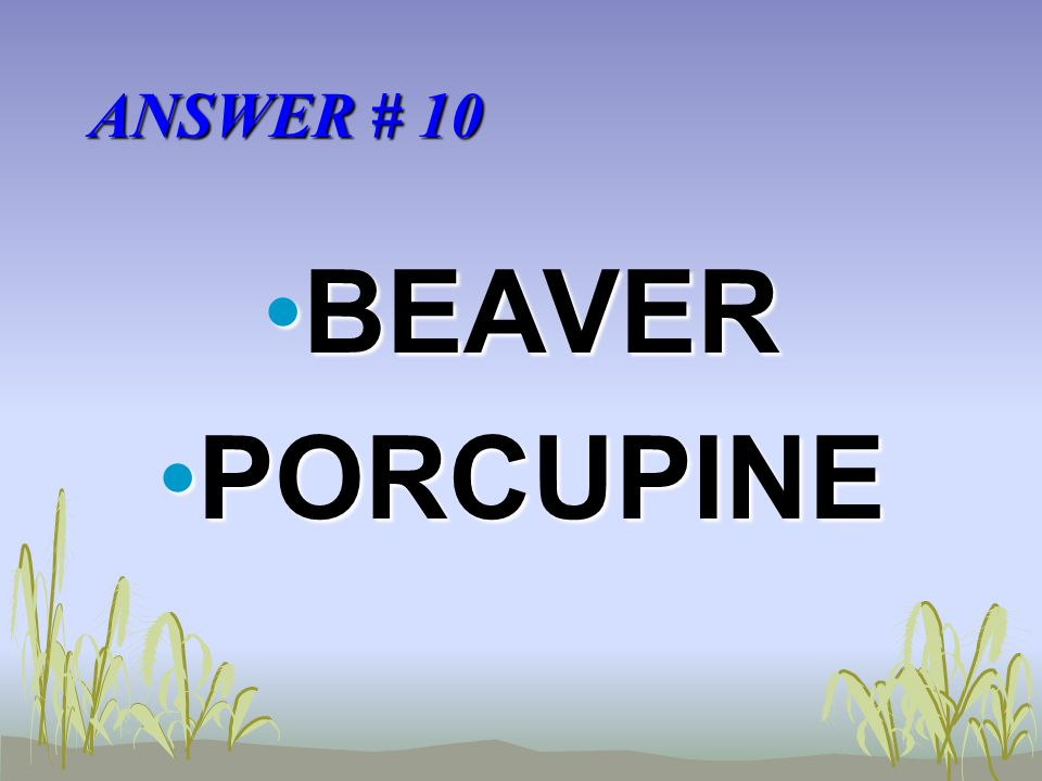 ANSWER # 10 BEAVERBEAVER PORCUPINEPORCUPINE