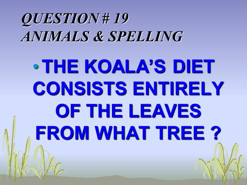 QUESTION # 19 ANIMALS & SPELLING THE KOALAS DIET CONSISTS ENTIRELY OF THE LEAVES FROM WHAT TREE THE KOALAS DIET CONSISTS ENTIRELY OF THE LEAVES FROM WHAT TREE