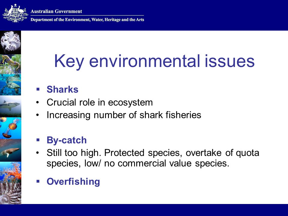 Key environmental issues Sharks Crucial role in ecosystem Increasing number of shark fisheries By-catch Still too high.