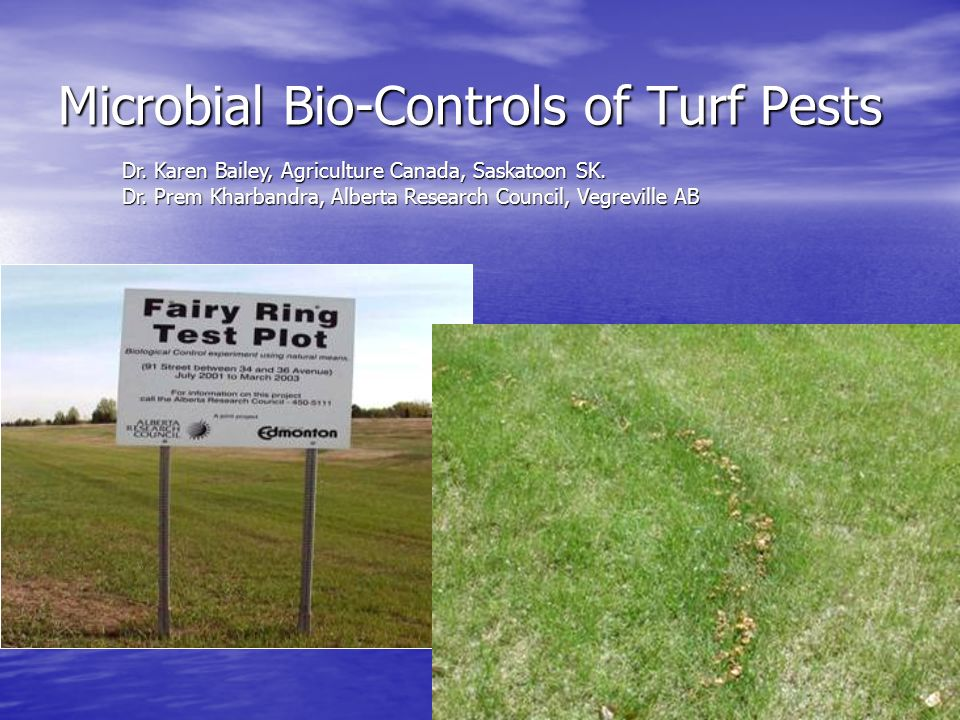Microbial Bio-Controls of Turf Pests Dr. Karen Bailey, Agriculture Canada, Saskatoon SK.