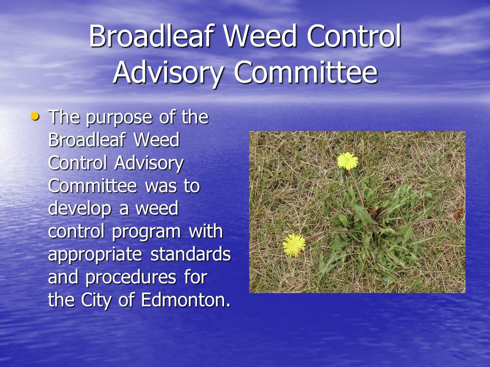 Broadleaf Weed Control Advisory Committee The purpose of the Broadleaf Weed Control Advisory Committee was to develop a weed control program with appropriate standards and procedures for the City of Edmonton.