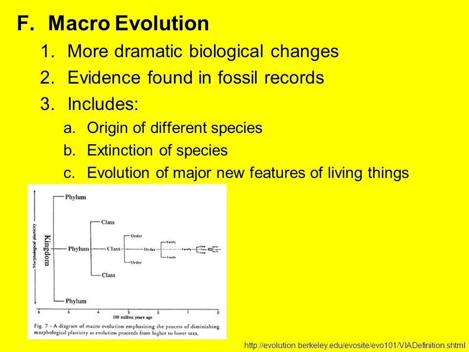 F.Macro Evolution 1.More dramatic biological changes 2.Evidence found in fossil records 3.Includes: a.Origin of different species b.Extinction of species c.Evolution of major new features of living things