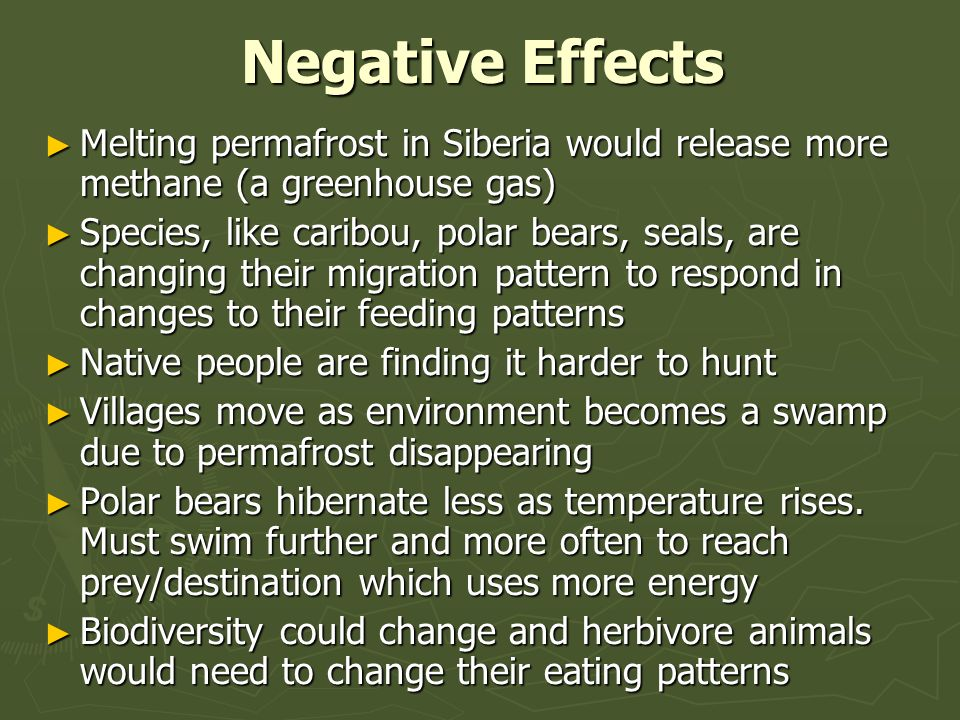 Negative Effects Melting permafrost in Siberia would release more methane (a greenhouse gas) Melting permafrost in Siberia would release more methane (a greenhouse gas) Species, like caribou, polar bears, seals, are changing their migration pattern to respond in changes to their feeding patterns Species, like caribou, polar bears, seals, are changing their migration pattern to respond in changes to their feeding patterns Native people are finding it harder to hunt Native people are finding it harder to hunt Villages move as environment becomes a swamp due to permafrost disappearing Villages move as environment becomes a swamp due to permafrost disappearing Polar bears hibernate less as temperature rises.