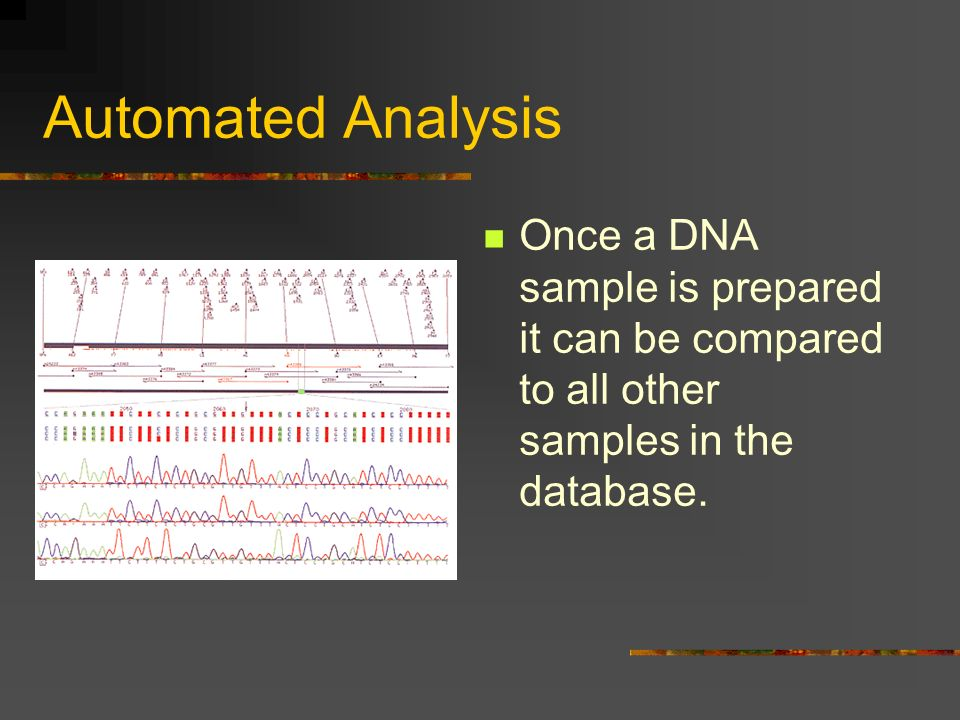 Automated Analysis Once a DNA sample is prepared it can be compared to all other samples in the database.