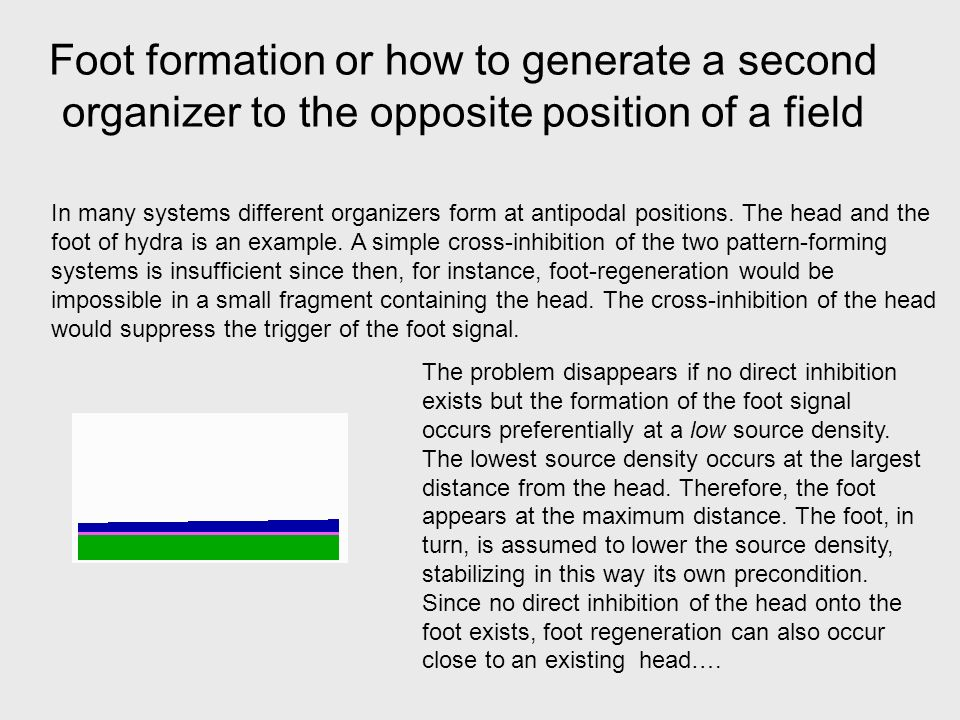Foot formation or how to generate a second organizer to the opposite position of a field In many systems different organizers form at antipodal positions.