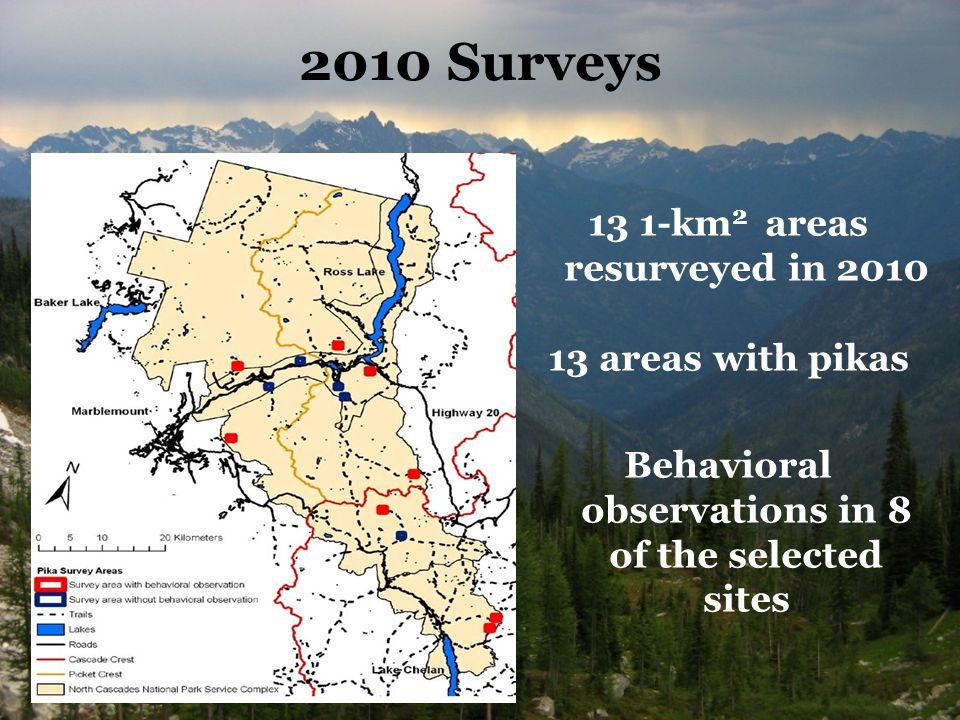 2010 Surveys 13 1-km 2 areas resurveyed in areas with pikas Behavioral observations in 8 of the selected sites
