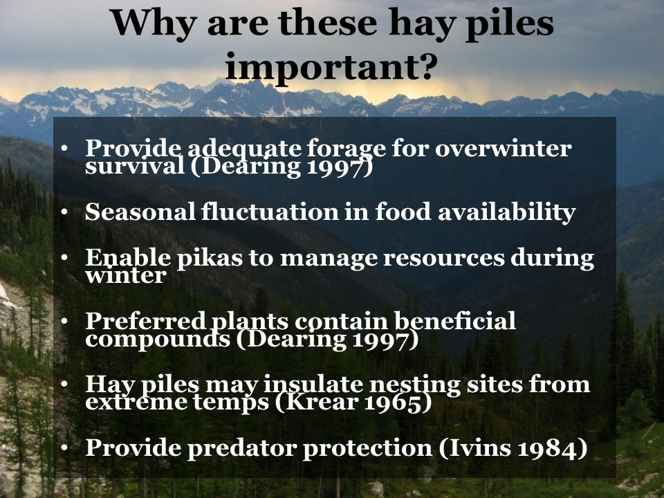 Why are these hay piles important.