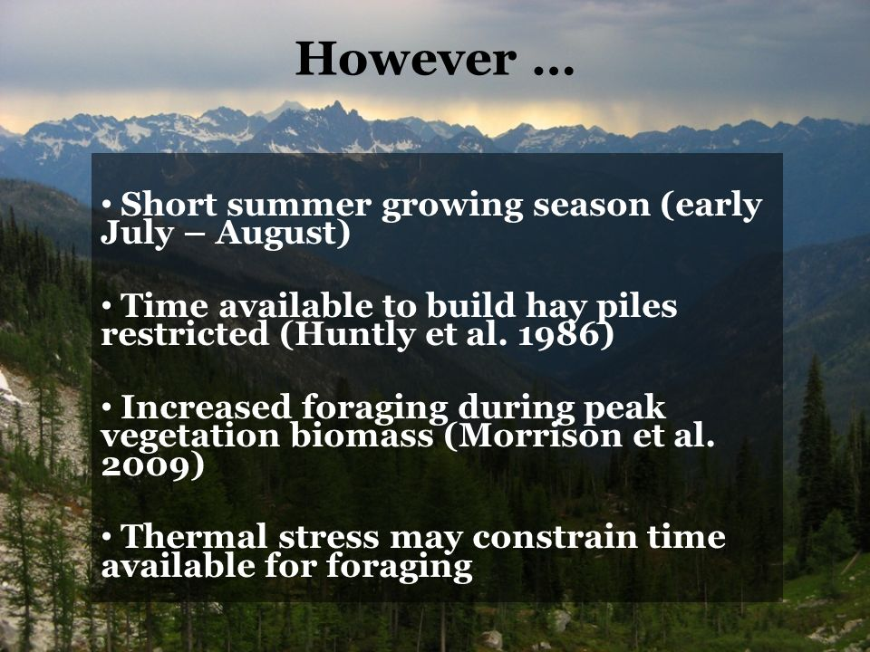 However … Short summer growing season (early July – August) Time available to build hay piles restricted (Huntly et al.