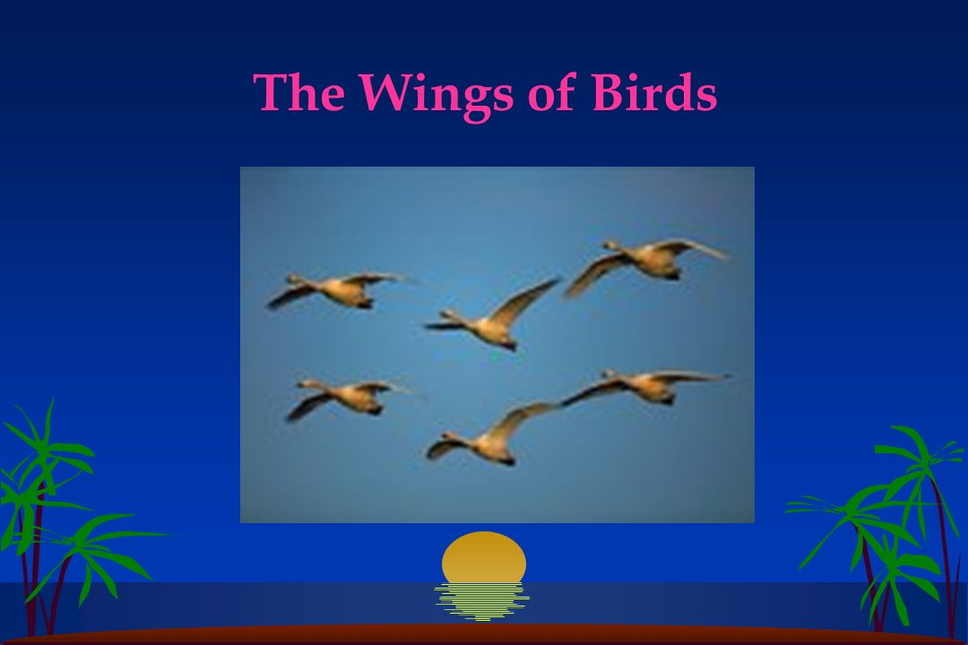The Wings of Birds