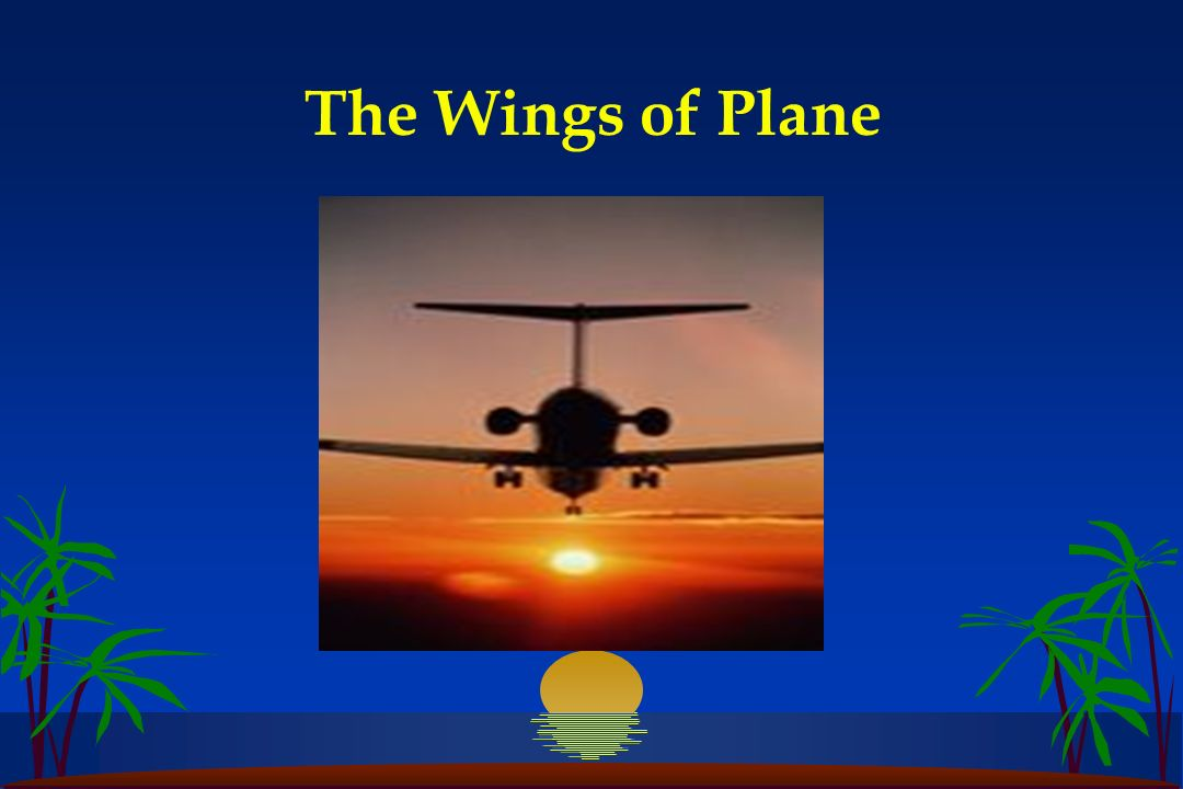 The Wings of Plane