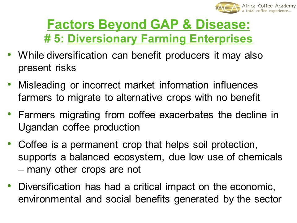 While diversification can benefit producers it may also present risks Misleading or incorrect market information influences farmers to migrate to alternative crops with no benefit Farmers migrating from coffee exacerbates the decline in Ugandan coffee production Coffee is a permanent crop that helps soil protection, supports a balanced ecosystem, due low use of chemicals – many other crops are not Diversification has had a critical impact on the economic, environmental and social benefits generated by the sector Factors Beyond GAP & Disease: # 5: Diversionary Farming Enterprises