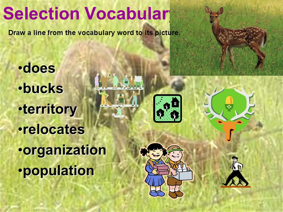 Selection Vocabulary doesdoes bucksbucks territoryterritory relocatesrelocates organizationorganization populationpopulation Draw a line from the vocabulary word to its picture.