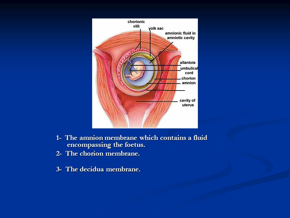 1- The amnion membrane which contains a fluid encompassing the foetus.