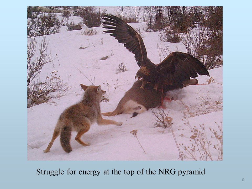 13 Struggle for energy at the top of the NRG pyramid