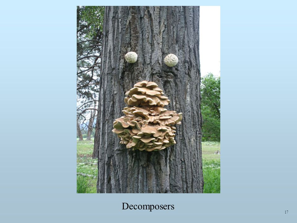 Decomposers 17