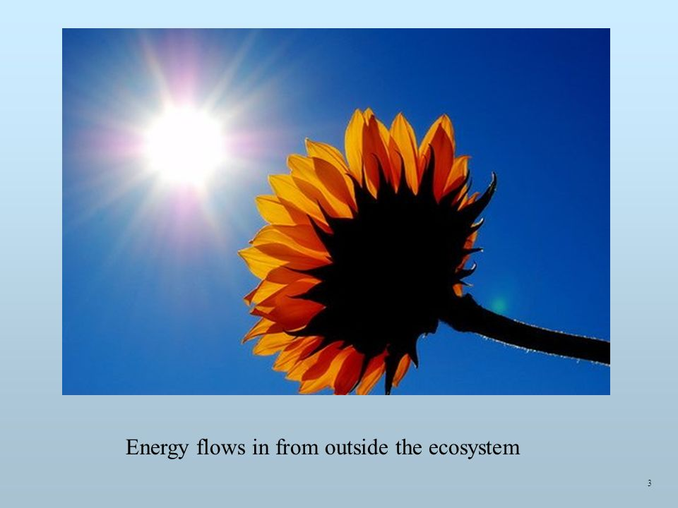 Energy flows in from outside the ecosystem 3