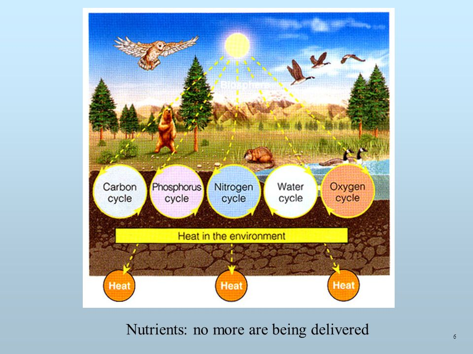Nutrients: no more are being delivered 6