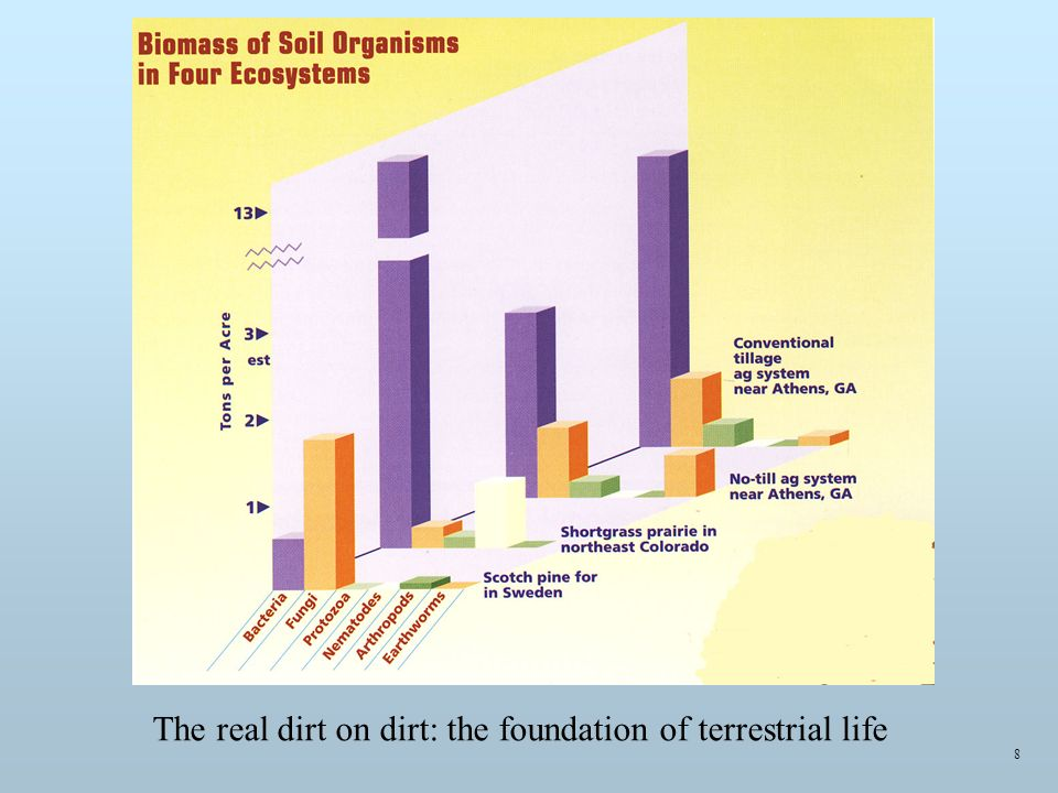 8 The real dirt on dirt: the foundation of terrestrial life