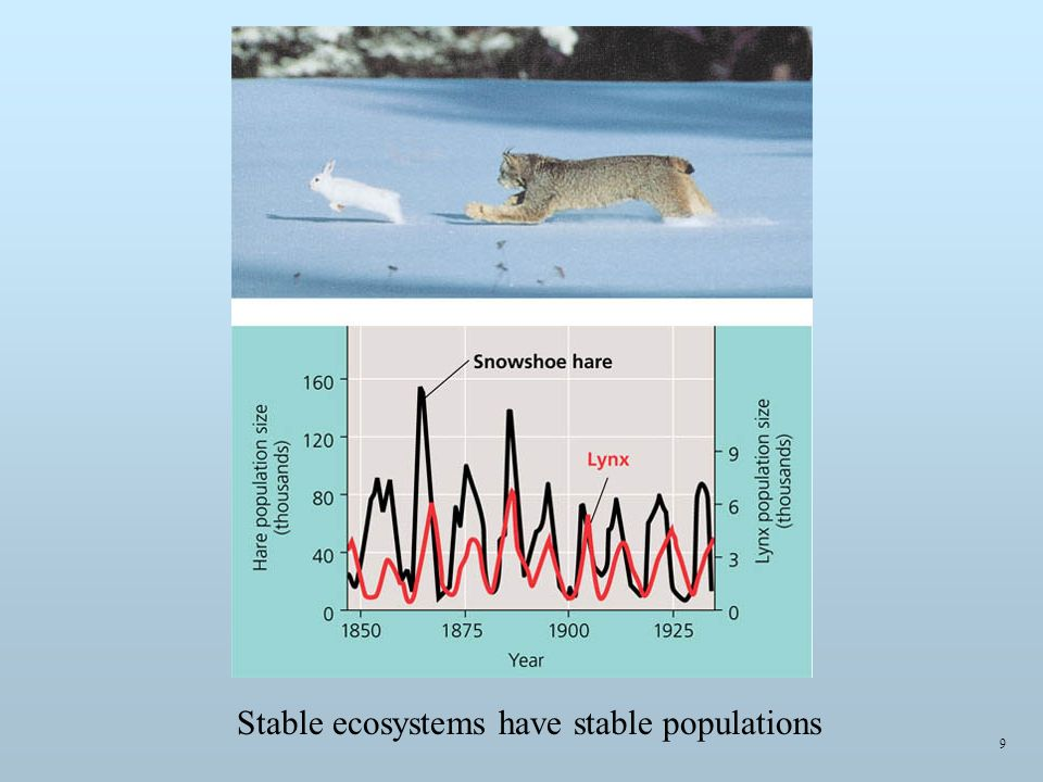 9 Stable ecosystems have stable populations