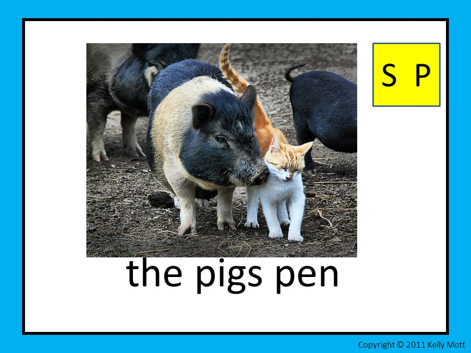 the pigs pen S P Copyright © 2011 Kelly Mott