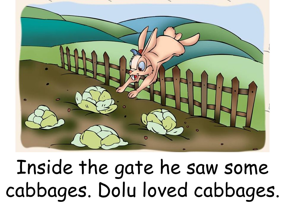 Inside the gate he saw some cabbages. Dolu loved cabbages.