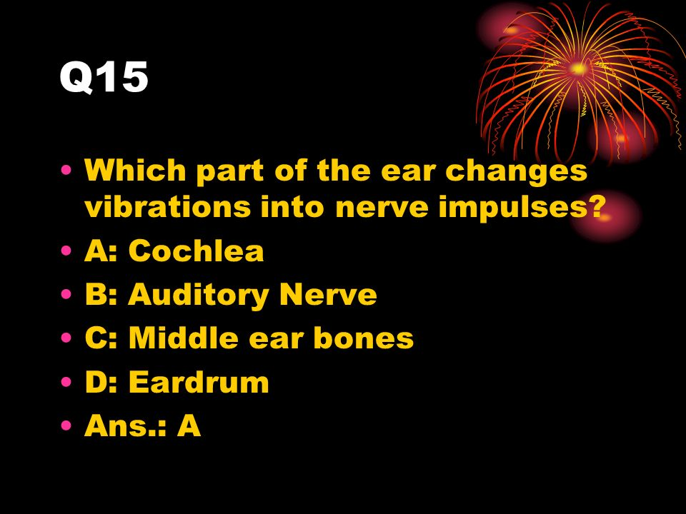 Q15 Which part of the ear changes vibrations into nerve impulses.