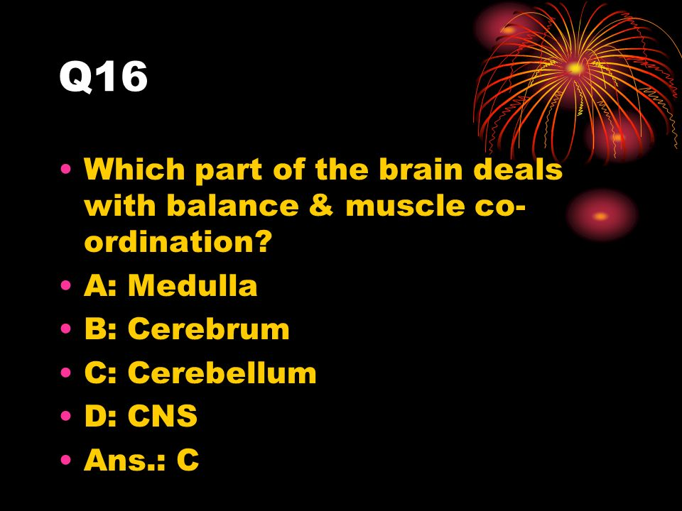 Q16 Which part of the brain deals with balance & muscle co- ordination.