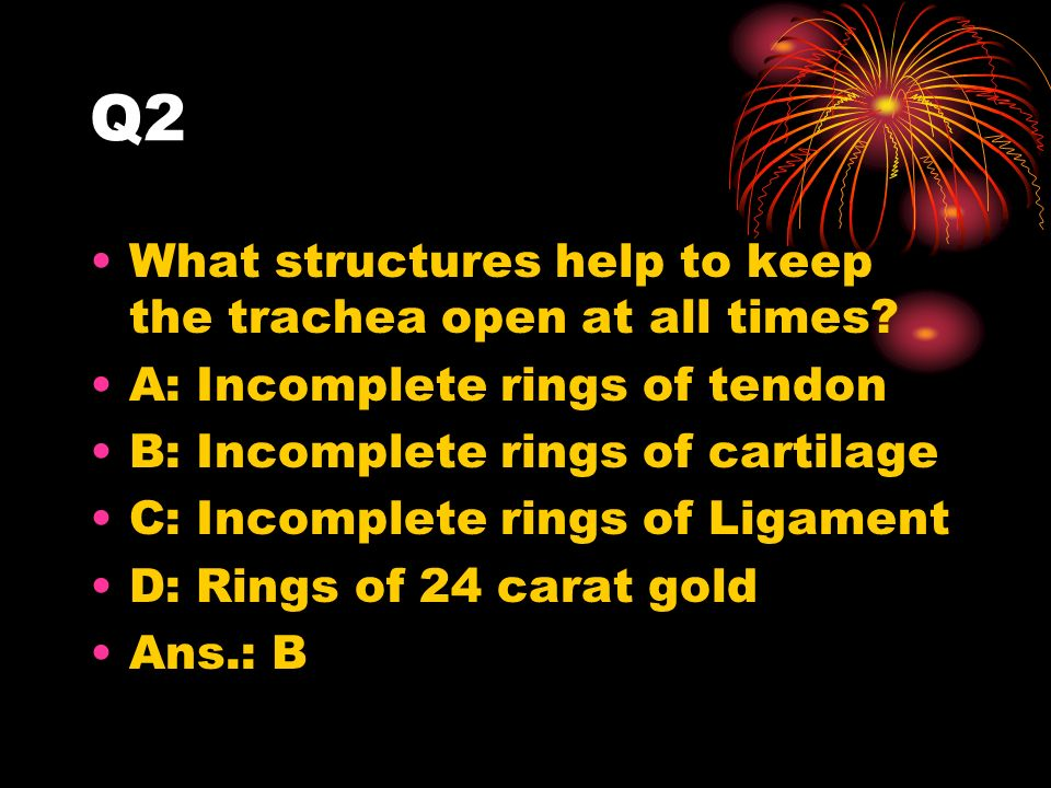 Q2 What structures help to keep the trachea open at all times.