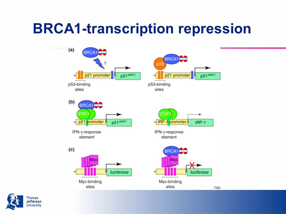 BRCA1-transcription repression
