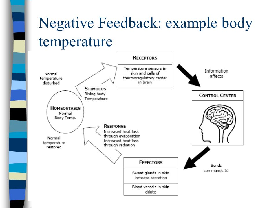 Negative Feedback: example body temperature